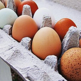 Local Pastured Eggs