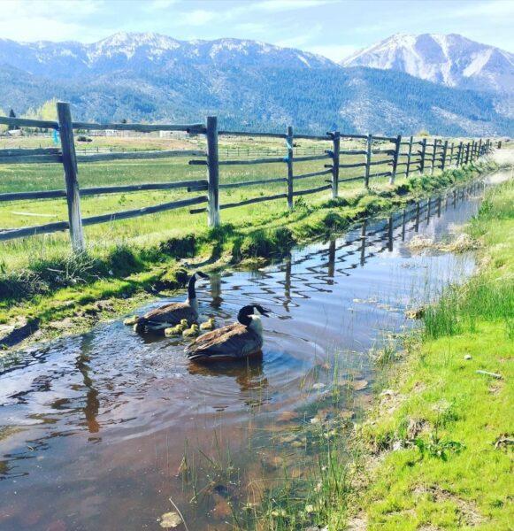 farm washoe valley